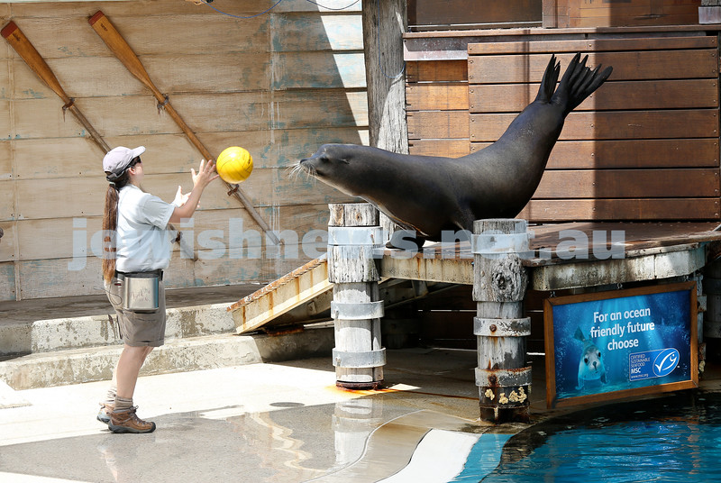 Former Masada College student Elly Neumann works as a zookeeper at Taronga Zoo, where she looks after and trains Seals and penguins. Elly during a seal show.