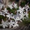 Kirribilli Flowers
