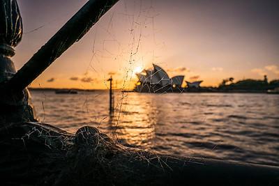 Spider web and Sydney Opera House.
