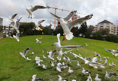Onslaught of birds