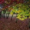 Autumn in Mt. Wilson