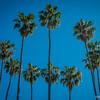 Palms of Milson's Park