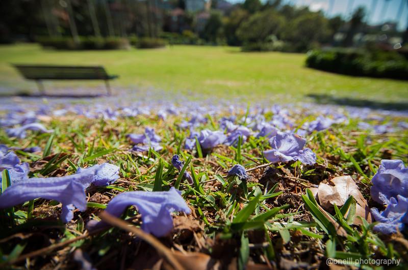 Jacarana Flowers