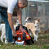 puppies help dad with the leaf blower at 9 weeks old