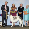 Ch. Sylvan Silver Springbok<br /> Spring's shining hour<br /> Best of Breed - Borzoi Club of America National Specialty<br /> Judge Bo Bengtson