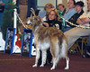 This photo was take by our friend, Tom Kasowski.<br /> Fiona in the Winners class at the 2006 National specialty in Olympia, Washington.