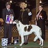 Marisol, just before her 2nd birthday - January 2011<br /> Finishing her Championship at the Midwest Borzoi Specialty.<br /> Judge Jon Steele, President Lynne Bennett