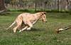 Gander at 14 weeks