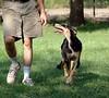 Jessica, the black and tan girl at 4 months - Zorro x ZuZu