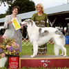 Spring wins a Group III in Ocala, at the JDFA September show. Judge Joan Lester.<br /> <br /> Don Meyer Photo