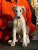 Kolya (formerly Dmitri) at 8 weeks