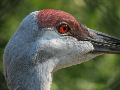 Sylvan Heights Waterfowl Park Scotland Neck