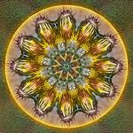 Sunflower Lollipops
