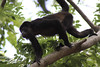 Monkeys 51