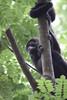 Monkeys 45