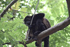 Monkeys 15