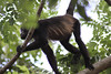 Monkeys 52