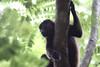 Monkeys 32