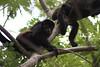 Monkeys 49