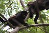 Monkeys 48