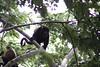 Monkeys 53
