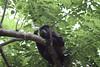 Monkeys 26