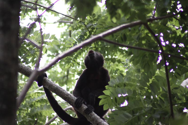 Monkeys 57