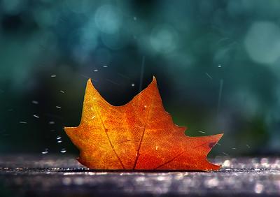 November Shower