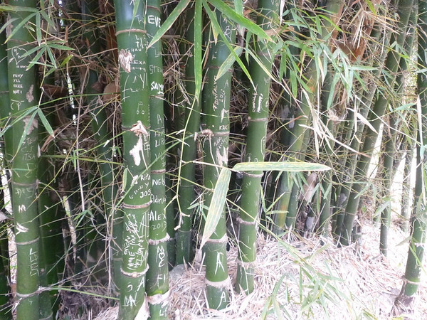 Lots of bamboo in the area