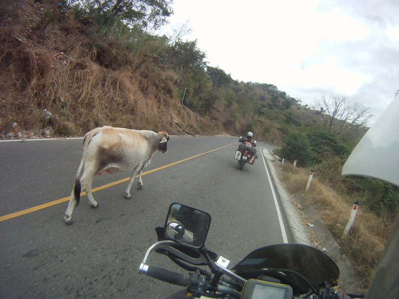 A paved bit. Even the cow was excited.