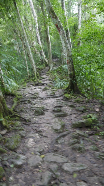 Typical path through the jungle