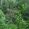 Jungle, Tikal, Guatemala