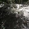 Impressive anthill