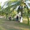 Juggling coconuts