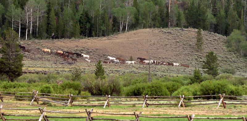 Horses to pasture.