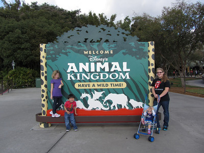 Animal Kingdom December 2011