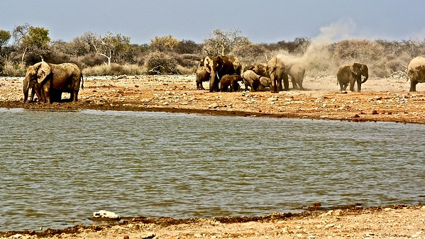 Elephants of Etosha