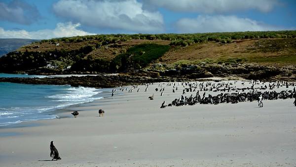 Leopard Beach