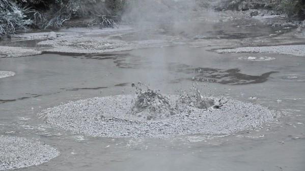 Roturua : Mud Pools