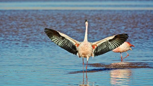 James Flamingo