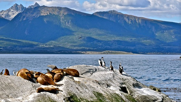 Ushuaia - Cormorants and Sea lions on the Beagle Channel