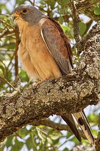 TANZANIA - BIRDS OF AFRICA