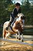 perky pony