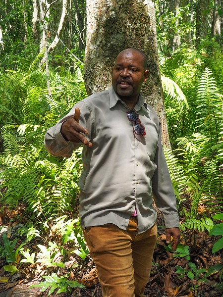 Lecturing on herbal remedies found in the forest