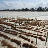 Seaweed farm on the Zanzibar coast