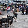 Vendor who sells fresh goat milk.  Very fresh.