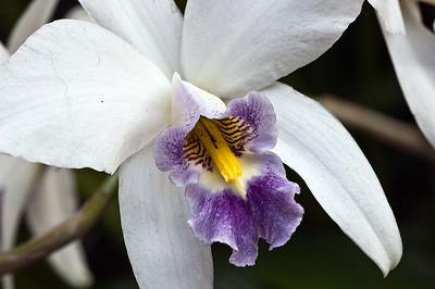 Longwood Flower Closeups 20100110