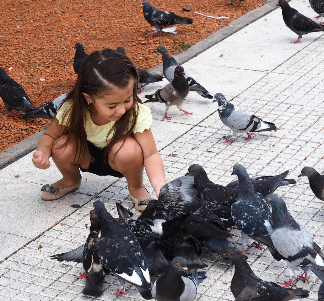 Feeding Pigeons in the Plaza del Congresso