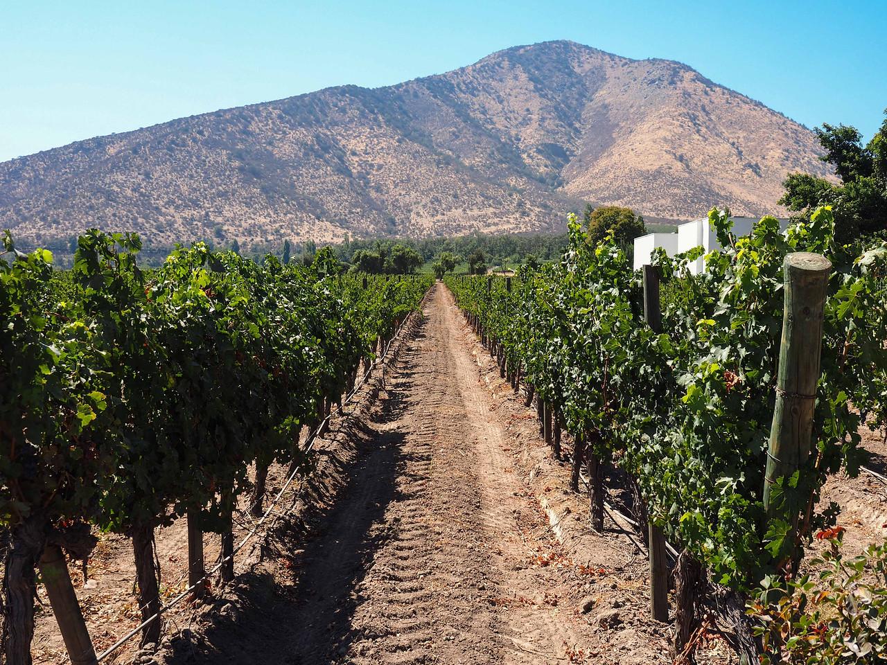 The vineyard (looks like California)