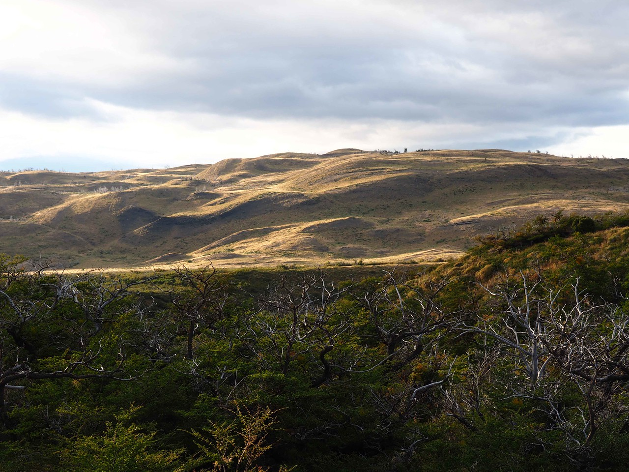 View of the Pampas, Torres del Paine NP